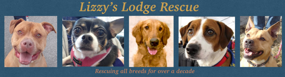 Lizzy's Lodge Rescue
